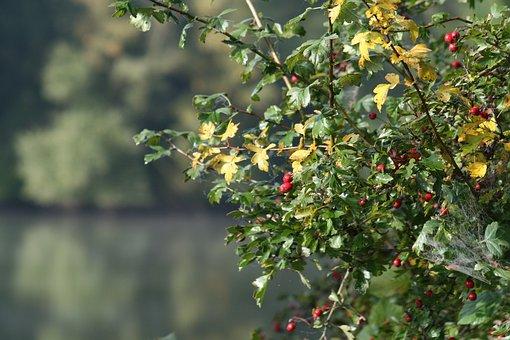 Bush, Fruits, Cobweb, Soft Fruit, Cure, Branch, Red