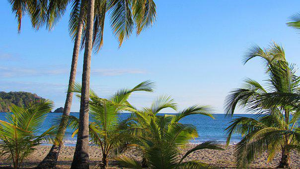 Beach, Playa Carrillo, Costa Rica, Palm Tree