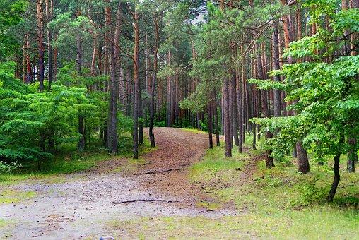 Forest, Mixed, Pine, Deciduous, Tree, Landscape, Beauty