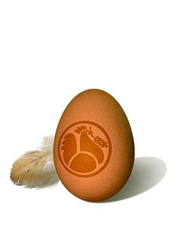 Egg, Hen's Egg, Keeping Chickens, Bio, Eco, Ecology