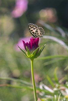 Flower, Bloom, Plant, Butterfly, Spring, Purple, Field