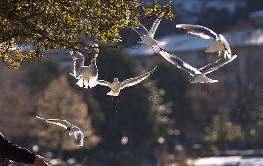 Birds, Seagulls, Freedom, Flight, Animal, Nature, Gull