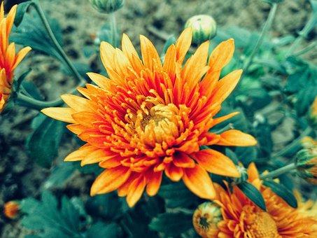 Yellow, Flower, Garden, Green, Beautiful, Beauty, Glory