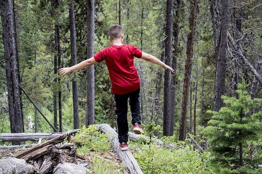 Nature, Hike, Woods, Hiking, Landscape, Forest