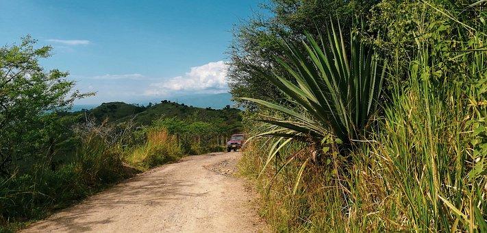 Path, Road, Buga, Auto, Landscape, Street, Forest