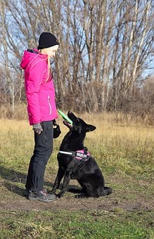 Black German Shepherd, Dog, Nice, Game, Frizbee