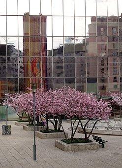 Modern Architecture, Urban Design, Structure, Glass