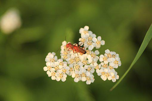 Insect, Grass, Summer, Animal, Plant, Macro