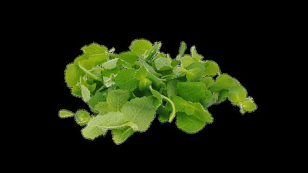 Applemint, Mentha Suaveolens, Mint, Herbacious, Plants