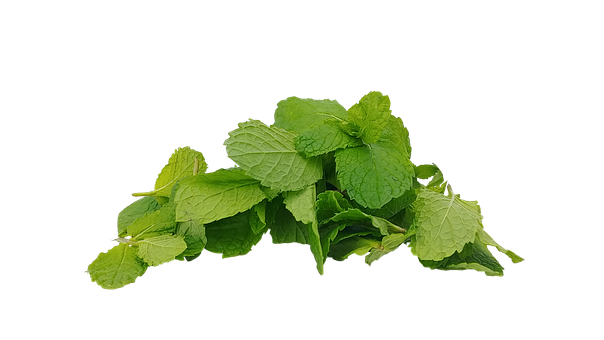 Spearmint, Mint, Hub, Mentha Spicata, The Leaves, Cup