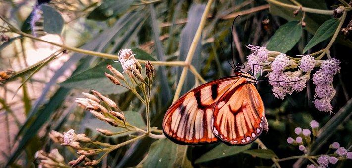 Butterfly, Flower, Flowers, Butterflies, Insects