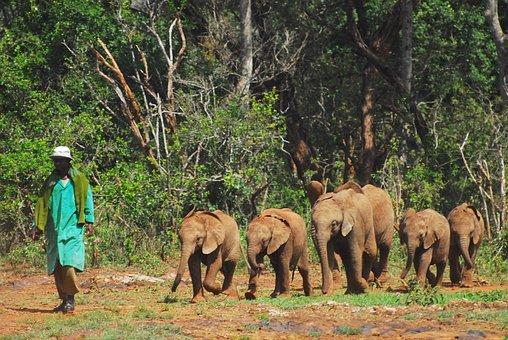 Baby Elephants, March, Nairobi, Kenya, Africa, Elephant