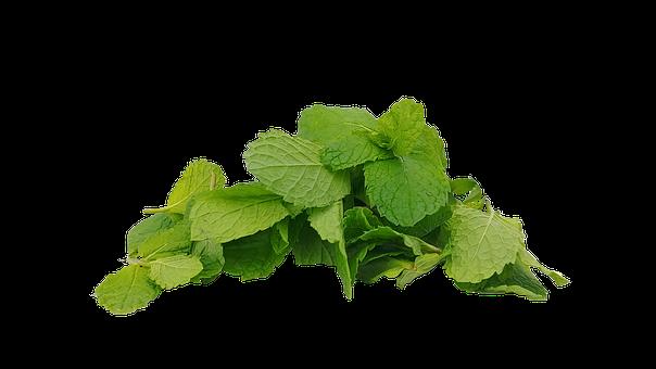 Spearmint, Mint, Hub, Mentha Spicata, The Leaves, Cup