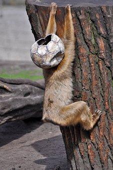 Monkey, Football, Ball, Fun, Funny, Snapshot, Mask