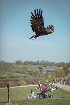 Noah's Ark Zoo Farm, Birds Of Prey, Eagle, Nature