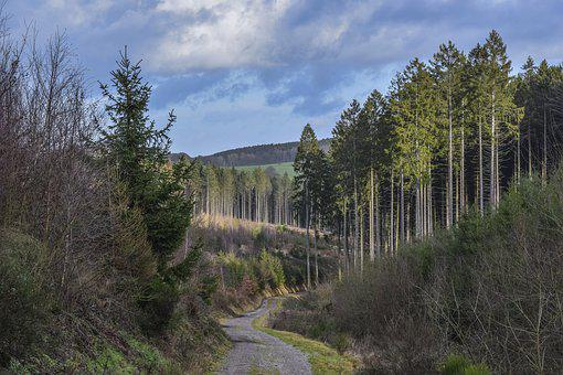 Forest, Nature, Landscape, Trees, Path, Green, Hiking