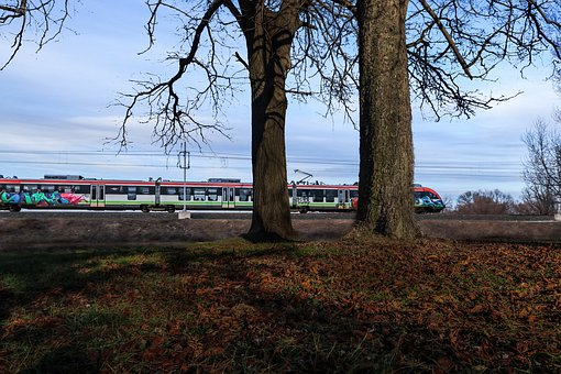 Train, Timber, Tree, Transport, Nature, Rails, Forest