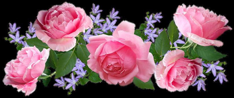 Flowers, Pink, Roses, Campanula, Arrangement, Cut Out