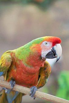 Bird, Macaw, Parrot, Animal, Colorful, Nature, Plumage