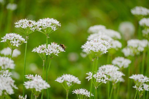 Bee, White Flower, Green, White, Flower, Nature, Pollen