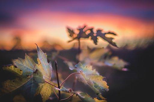 Sunset, Purple, Tree, Leaves, Autumn, Sky, Nature