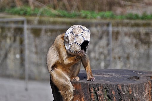Monkey, Football, Ball, Fun, Funny, Snapshot, Mask