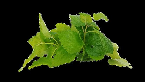 Mint, Hub, Spearmint, The Leaves, Cup, Tee, Health