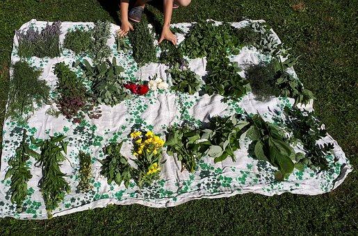Herbs, Health Day, Summer, Child, Spring, Hobby, Spice