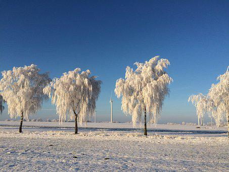 Winter, Sun, Fresh, Hoarfrost, Nature, Relaxation