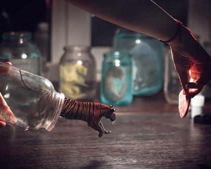 Tiger, Photoshop, Collage, Design, Surrealism, Animals