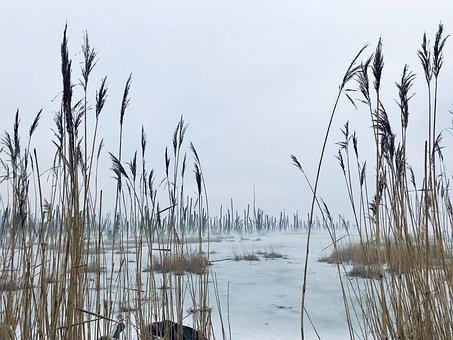 Swamp, Moor, Landscape, Fog, Baltic Sea, Usedom, Ice