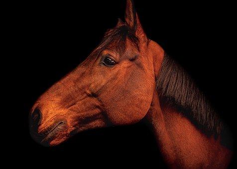 Art, Horse, Black Background, Drama, Vintage, Animal
