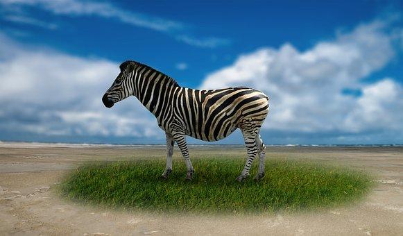 Zebra, Striped, Africa, Animal World, Black And White