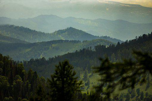 Summer, Russia, Altai, Nature, Forest, Mountain
