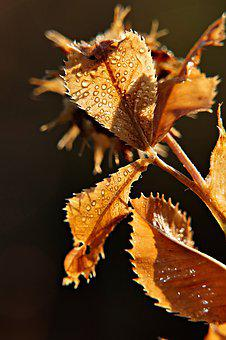 Leaves, Backlighting, Raindrop, Autumn, Fall Foliage
