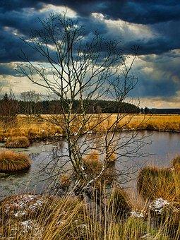 Eifel, Venn, Winter, Moor, Landscape, Nature, Belgium