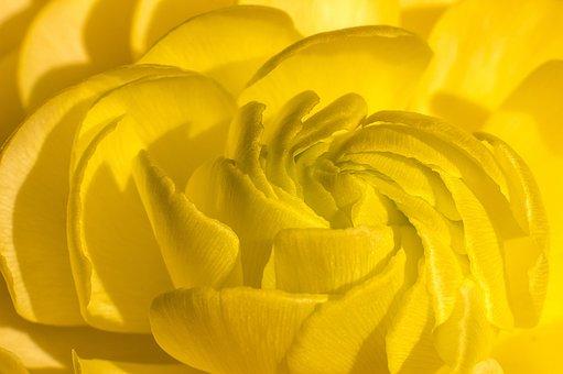Blossom, Bloom, Petals, Yellow, Flower, Peony
