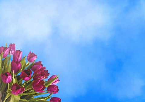 Background, Tulips, Clouds, Sky, Flowers, Bouquet