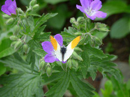 Butterfly, Blossom, Bloom, Orange