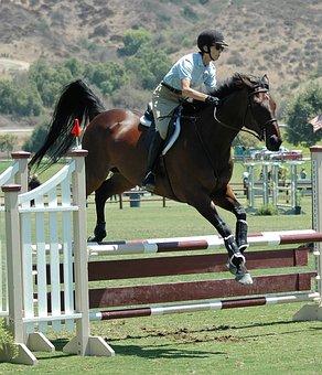 Horse, Horses, Horseback, Equestrian, Animal