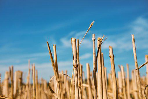 Straw, Straw Box, Harvest, Field, Stubble, Agriculture
