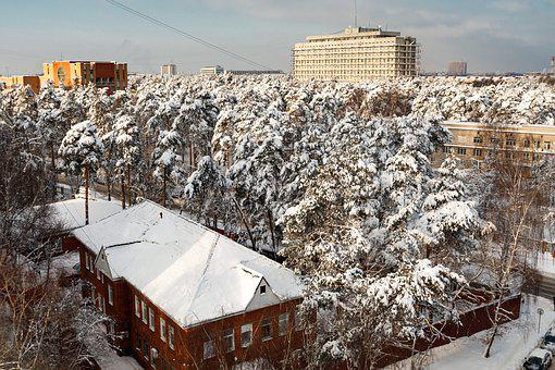 Winter, Snow, Frost, Coldly, City, Trees, Branch