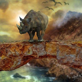 Rhino, Pachyderm, Africa, Horn, Mammal, Animal World