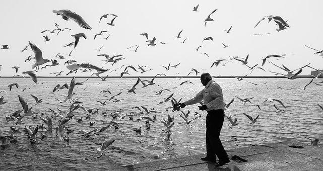 Birds, India, Water, River, Man, Man Feeding Birds