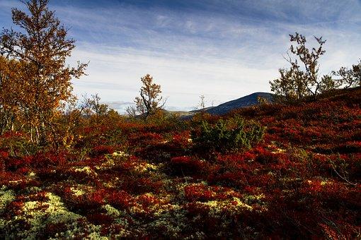 Hills, Leaves, Foliage, Vegetation, Heather, Autumn