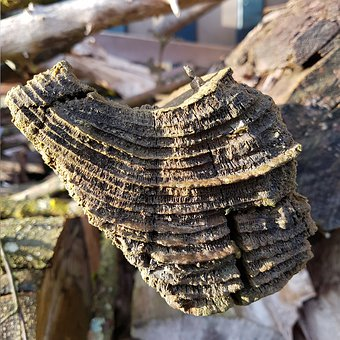 Log, Rot, Annual Rings, Lapsed, Section, Structure