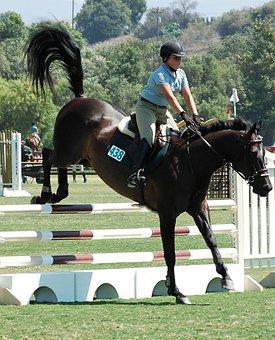 Horse, Horses, Equestrian, Animal, Ride, Mammal, Riding