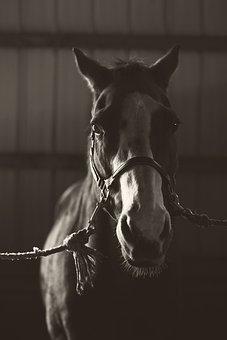 Horse, Pony, Animal, Barn, Nature, Mane, Rural, Mammal