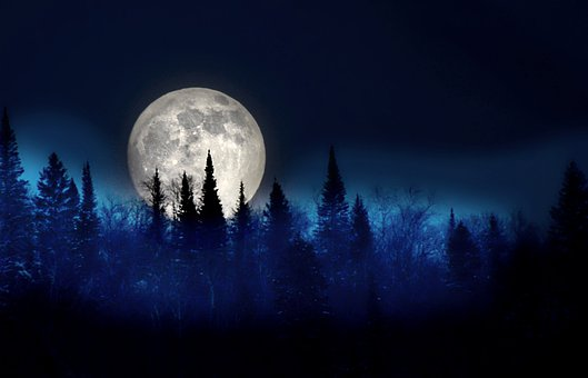 Moon, Trees, Night, Landscape, Silhouette, Sky, Fir