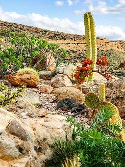 Cactus, Garden, Nature, Green, Plants, Botanical